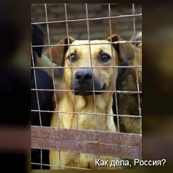Приюту для собак требуется помощь, город Архангельск