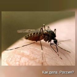 Комары будут переносить вакцины от опасных болезней
