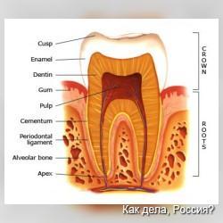 Знаете ли Вы, какая самая прочная ткань человеческого тела?
