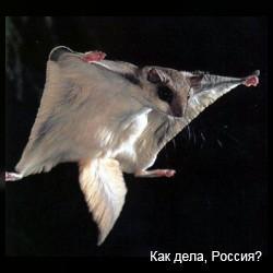 Не только птицам дано летать:) Видео