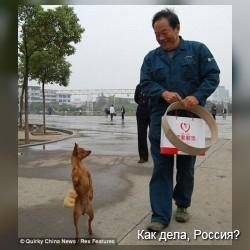 Лу-лу - собака, которая ходит на задних лапах