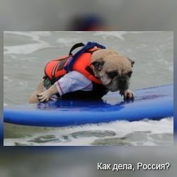 Турнир по серфенгу среди собак