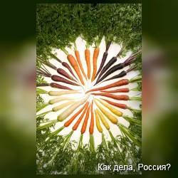 Морковка - «Ешь ее как фаст фуд»!
