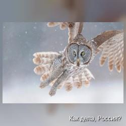 Высокотехнологичная съемка животного мира