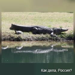 Аллигатор и черепашка дружат уже 4 года. Фото