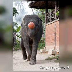Слоновий баскетбол