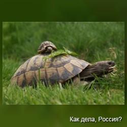 Что есть любовь? Фото