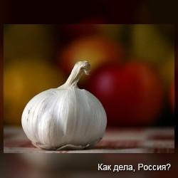 Что мы знаем о чесноке?