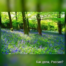 Яркие краски весны. Фото