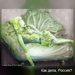 Овощное искусство