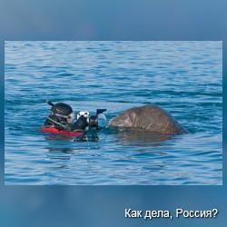 Наедине с моржом. Путешествие Павла Саудерса