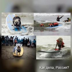 Собаки-серферы и их соревнования