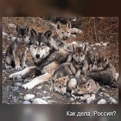 Волк волку друг